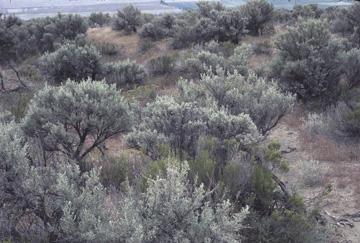 Columbia Basin Ecoregion scene